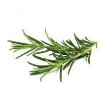 Click And Grow Smart Garden Refill 3-Pak - Koriander